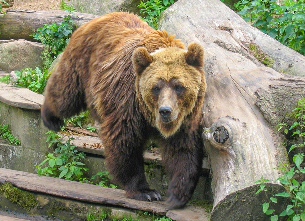 Contentbär im Zoo