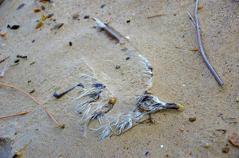 SandstrandSEO – Tote Möwe